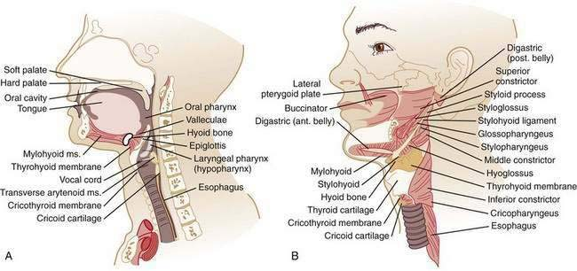 Esophageal Neuromuscular Function and Motility Disorders ...