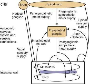 Small Intestinal Motor And Sensory Function And