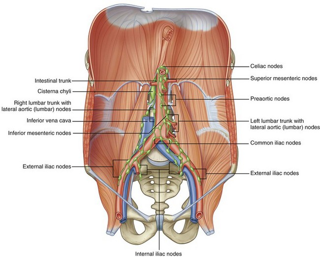 Surgical Anatomy Of The Retroperitoneum Adrenals Kidneys And