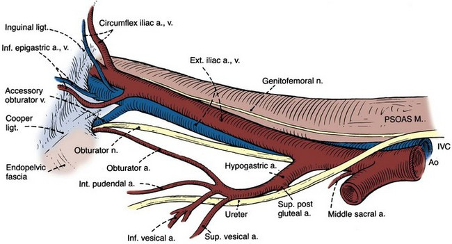 Anatomy of the Lower Urinary Tract and Male Genitalia ...