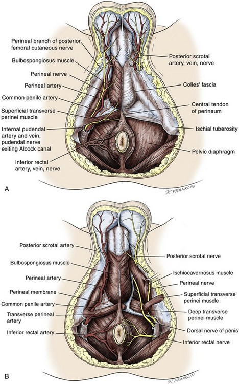 Surgery Of The Penis And Urethra Abdominal Key