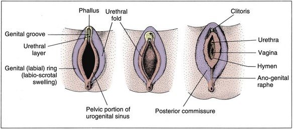 Sexual Differentiation: Normal and Abnormal   Abdominal Key