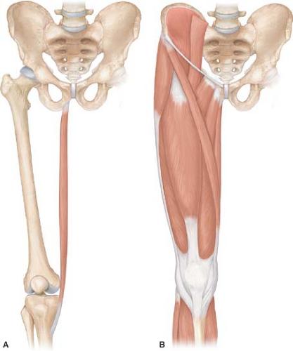 Gracilis Muscle Flaps | Abdominal Key