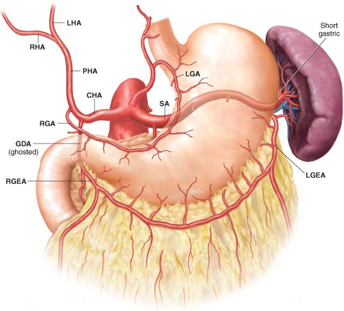 anatomy d2 We report a case of successful laparoscopic distal gastrectomy with d2 lymph  node dissection preserving the common hepatic artery branched from the left.
