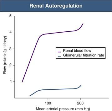 Renal Physiology   Abdominal Key