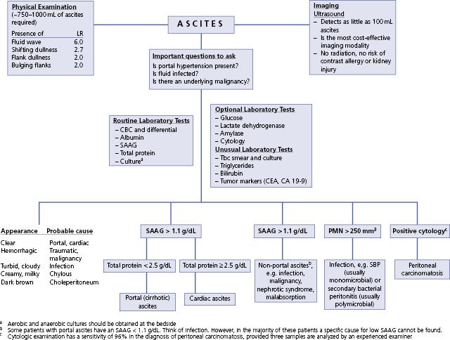 19: ascites | abdominal key, Skeleton