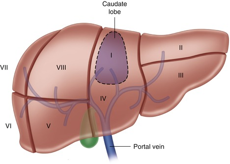 Surgical Anatomy Of The Liver Abdominal Key